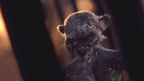 Image de synthèse représentant un singe zombie.